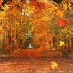 Woodlands 1 Path
