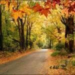 Woodlands 7 Road