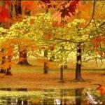 Woodlands 8 Fall