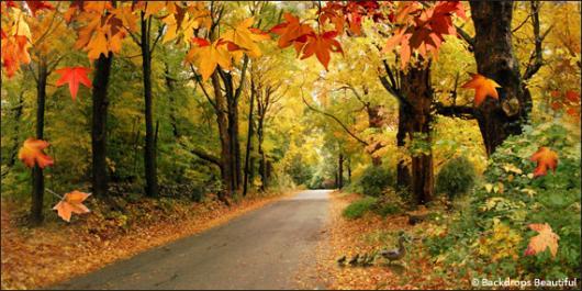 Fall Event Design Inspiration - Woodlands 7 Road