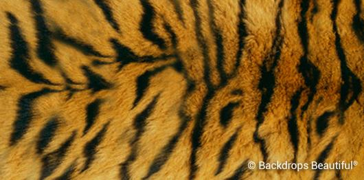 Backdrops: Skin Tiger 3