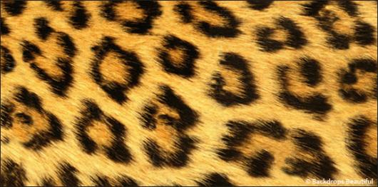 Backdrops: Skin Leopard 2