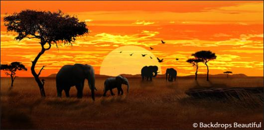 Backdrops: African Elephant Sunset 1