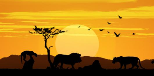 Backdrops: African Lion Sunset