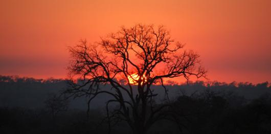 Backdrops: Tree Sunset
