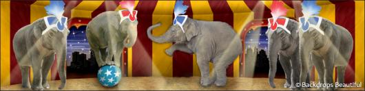 Backdrops: Circus  9 Elephant