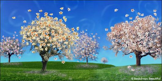Backdrops: Cherry Blossom 1