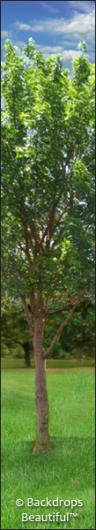 Backdrops: Tree Leg  4A