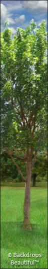 Backdrops: Tree Leg  4B