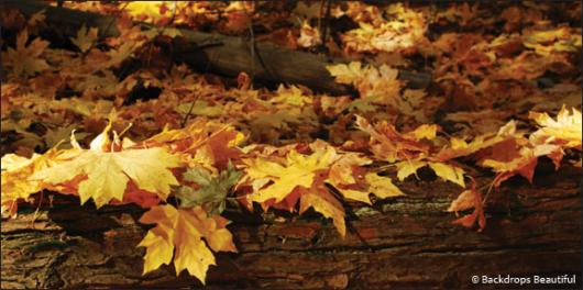 Backdrops: Fall Leaves 2