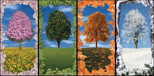 Backdrops: Tree 2 Seasons (Alt View)