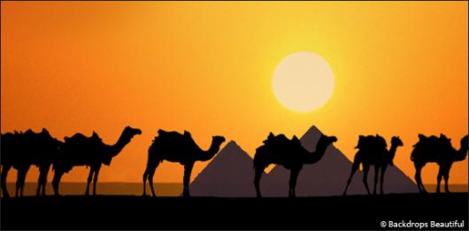 Backdrops: Camel Silhouette 2