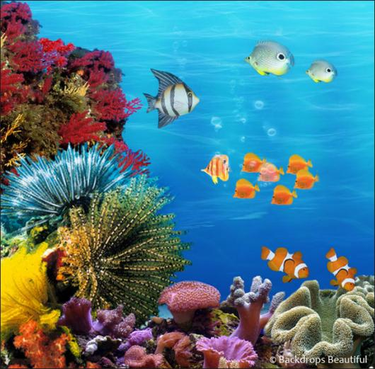 Coral Reef Backdrop A Backdrops Beautiful