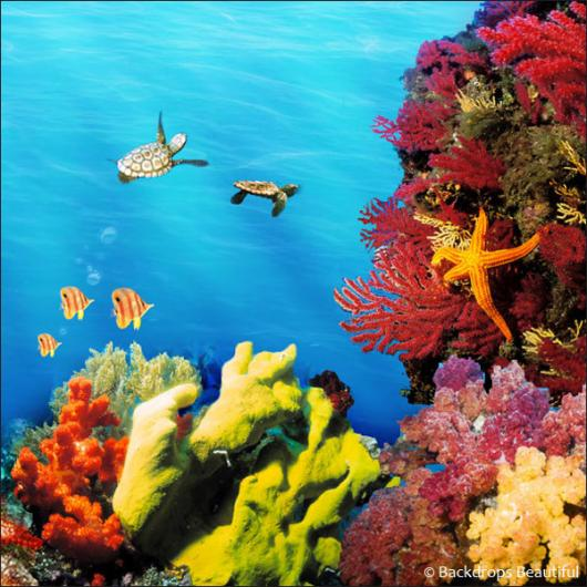 Backdrops: Coral Reef B
