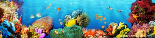 Backdrops: Coral Reef 5