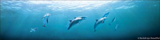 Backdrops: Dolphins 2