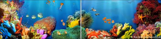 Backdrops: Coral Reef 6 Panel