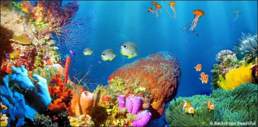 Backdrops: Coral Reef 1