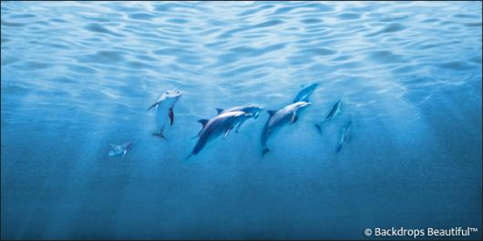 Backdrops: Dolphins